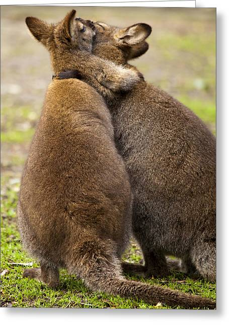 Kangaroo Photographs Greeting Cards - Embrace Greeting Card by Mike  Dawson