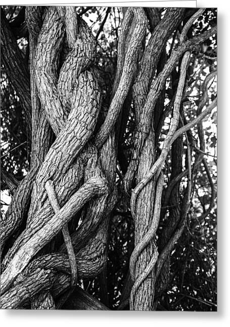 Tree Huggers Greeting Cards - Embracing rooted love Greeting Card by Luna Curran