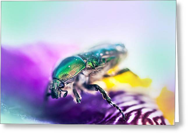 Healing Energy Greeting Cards - Emerald Beetle on Purple Iris. Macro Iris Series Greeting Card by Jenny Rainbow