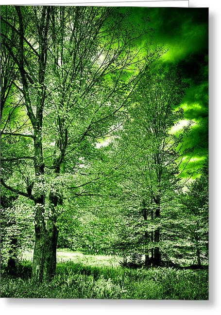 Lanscape Greeting Cards - Emerald Clearing Greeting Card by David Patterson