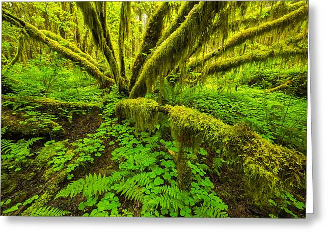 Olympic National Park Greeting Cards - Emerald Hoh Greeting Card by Joseph Rossbach