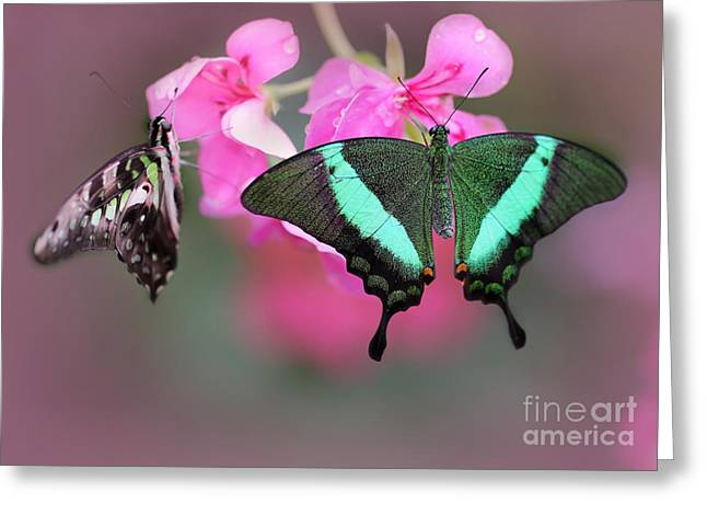 Broward Greeting Cards - Emerald Swallowtail Butterflies Greeting Card by Sabrina L Ryan