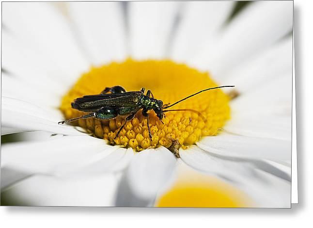 Insect Sculptures Greeting Cards - Emerald Yellow and White Greeting Card by David Davies