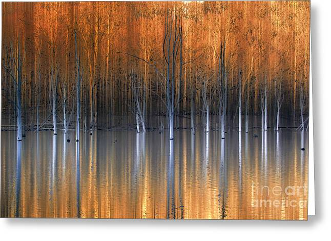 Emerging Beauties Reflected Greeting Card by Marco Crupi