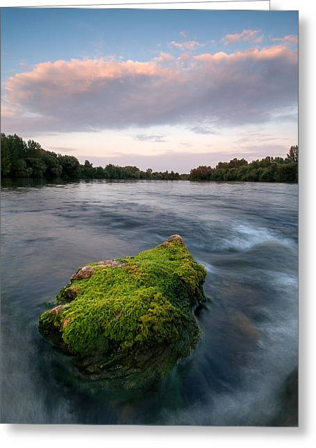 Riverscapes Greeting Cards - Emerging Greeting Card by Davorin Mance
