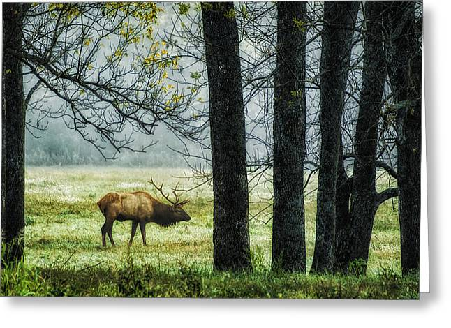 Emerging from the Fog Greeting Card by Priscilla Burgers