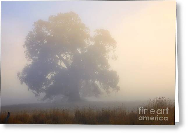 Fog Mist Greeting Cards - Emerging Greeting Card by Mike  Dawson