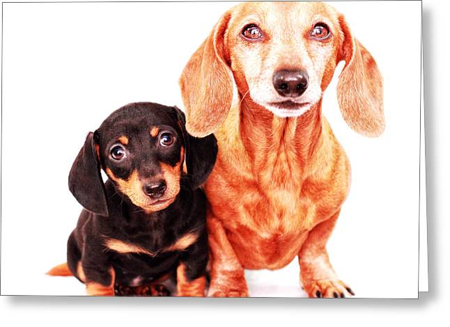 Hounddog Greeting Cards - Emily and Rufus  Greeting Card by Johnny Ortez-Tibbels