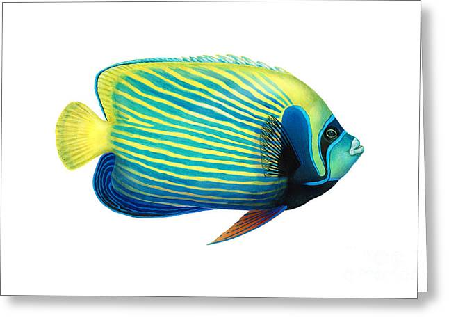Reef Fish Greeting Cards - Emperor Angelfish Pomacanthus Imperator Greeting Card by Carlyn Iverson
