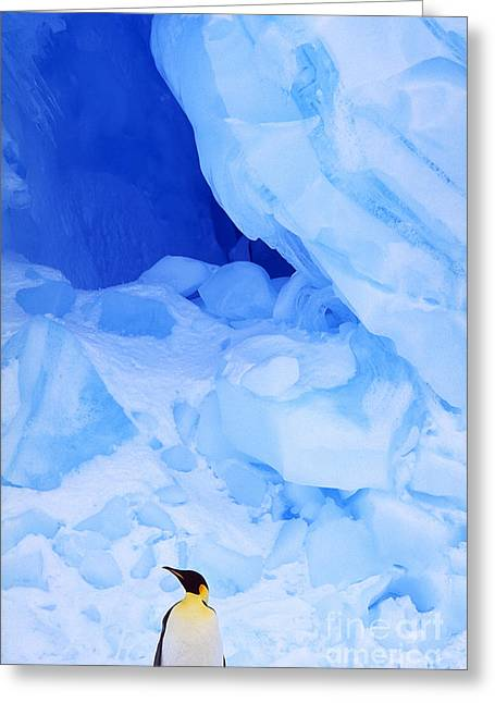 Emperor Penguin Greeting Cards - Emperor Penguin Greeting Card by Art Wolfe
