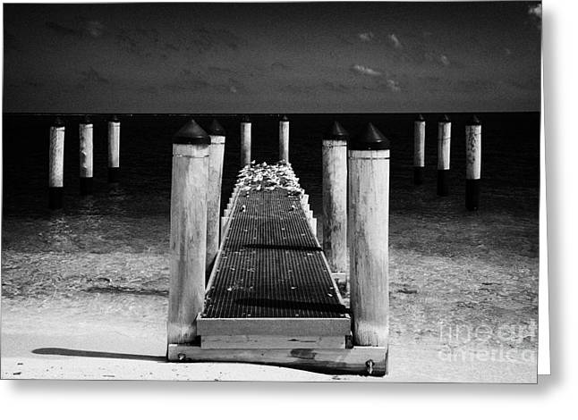 Dry Tortugas Greeting Cards - Empty Boat Pier With Seabirds Dry Tortugas Florida Keys Usa Greeting Card by Joe Fox