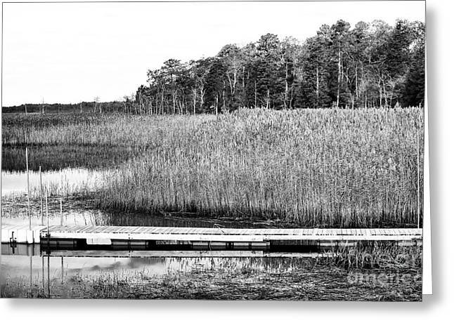 Empty Pine Barrens Greeting Card by John Rizzuto