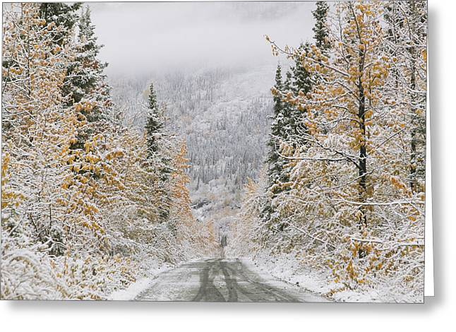 Empty Road Passing Through A Forest Greeting Card by Panoramic Images
