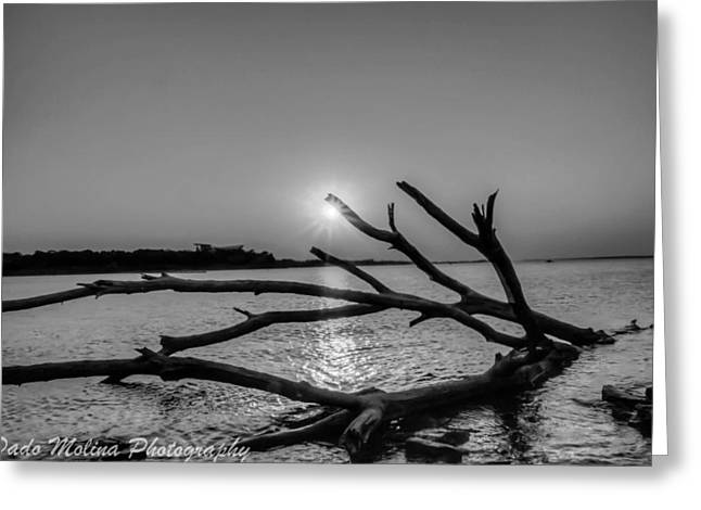 Drift Wood Greeting Cards - Empty Sunset Greeting Card by Dado Molina