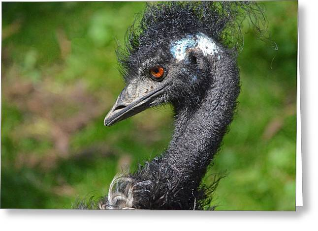 Emu An Angry Looking Bird Who's Having A Bad Hair Day Greeting Card by Jim Fitzpatrick