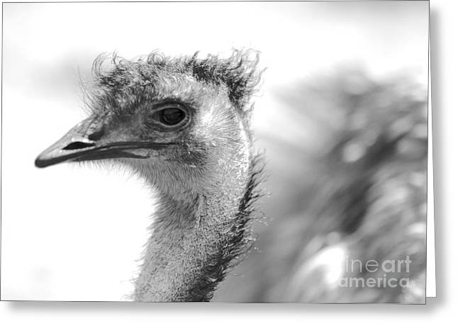Emu Greeting Cards - Emu - Black and White Greeting Card by Carol Groenen