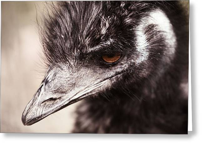 Emu Greeting Cards - Emu Closeup Greeting Card by Karol  Livote