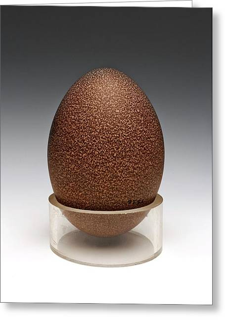 Emu Egg Greeting Card by Ucl, Grant Museum Of Zoology