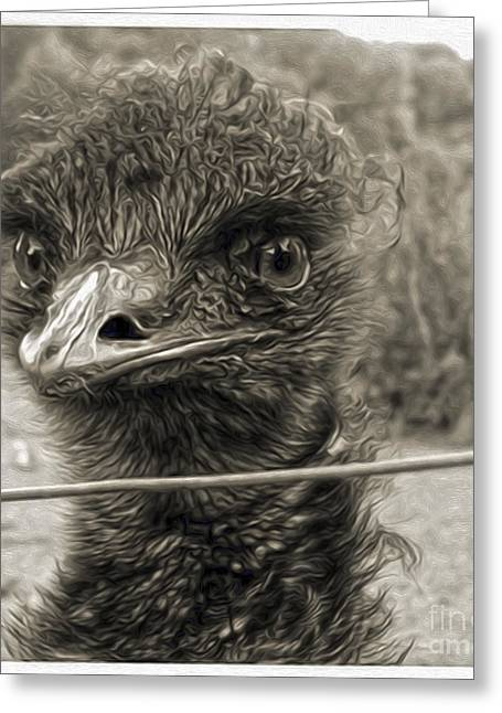 Gregory Dyer Digital Greeting Cards - Emu Greeting Card by Gregory Dyer