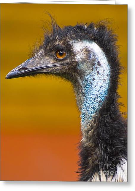 Emu Greeting Cards - Emu Greeting Card by Martyn F. Chillmaid