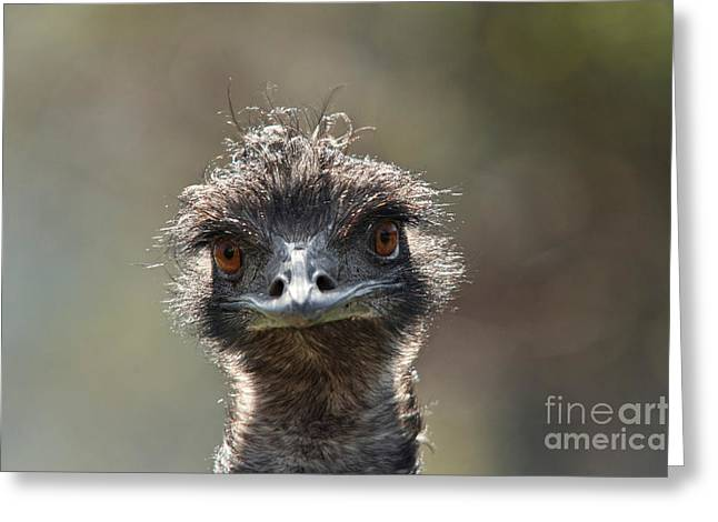Emu Greeting Cards - Emu Portrait Greeting Card by Thomas Gehrke