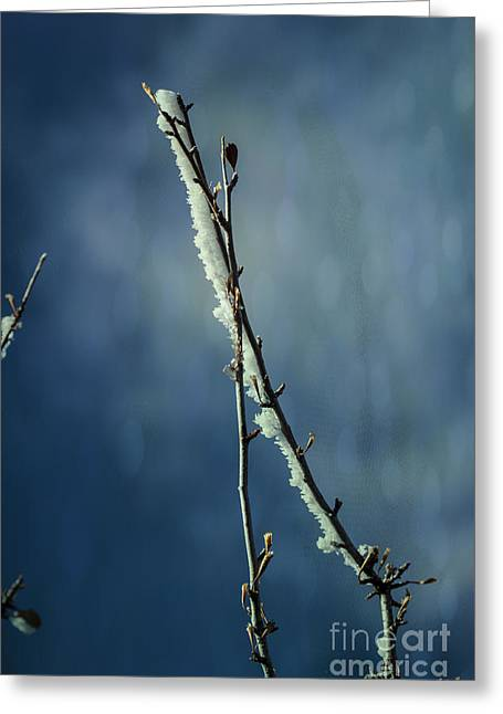 Coldly Greeting Cards - Encapsulated Crystal on Twig Greeting Card by Janice Rae Pariza