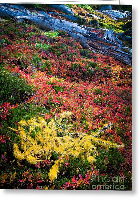 Alpine Greeting Cards - Enchanted colors Greeting Card by Inge Johnsson