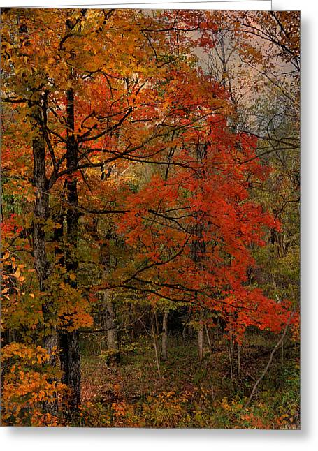 Mystical Landscape Greeting Cards - Enchanted Forest Greeting Card by Deena Stoddard