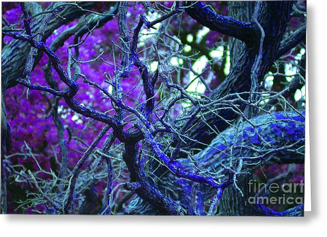 First Star Art Mixed Media Greeting Cards - Enchanted Forest Greeting Card by First Star Art
