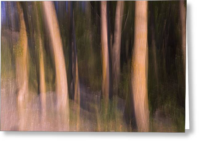 Horizontal Abstract Landscape Greeting Cards - Enchanted Forest Greeting Card by Guido Montanes Castillo