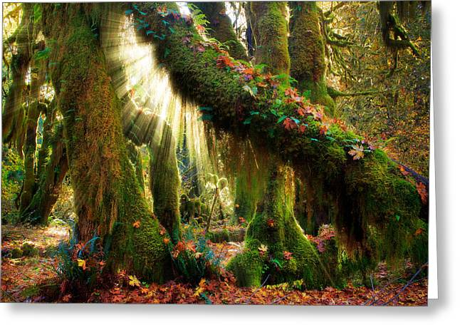 Moss Greeting Cards - Enchanted Forest Greeting Card by Inge Johnsson