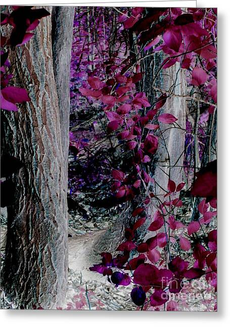 Most Viewed Greeting Cards - Enchanted Forest Greeting Card by Martin Howard