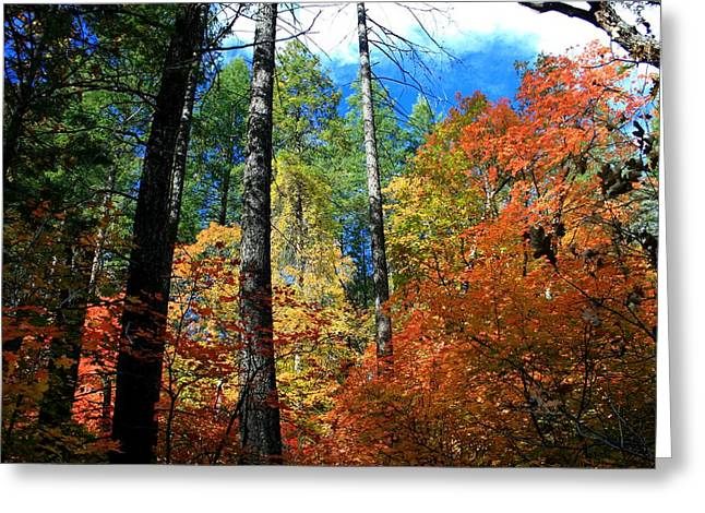 West Fork Greeting Cards - Enchanted Forest Greeting Card by Miles Stites