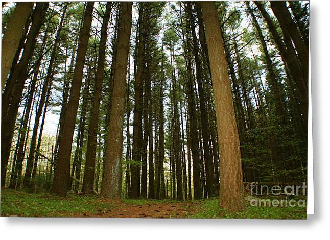 Natures Photos Greeting Cards - Enchanted Connecticut Forest Greeting Card by Neal  Eslinger