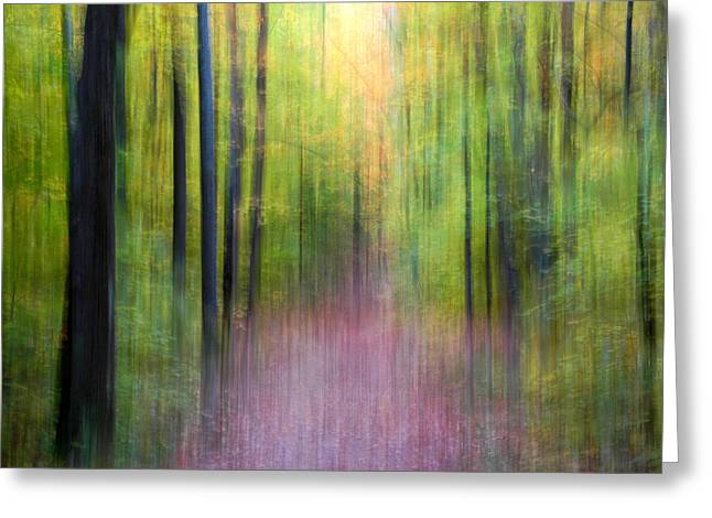 Gatineau Park Greeting Cards - Enchanted Forest Greeting Card by Rob Huntley