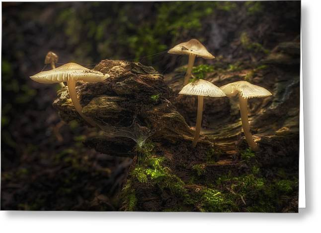 Mushrooms Greeting Cards - Enchanted Forest Greeting Card by Scott Norris