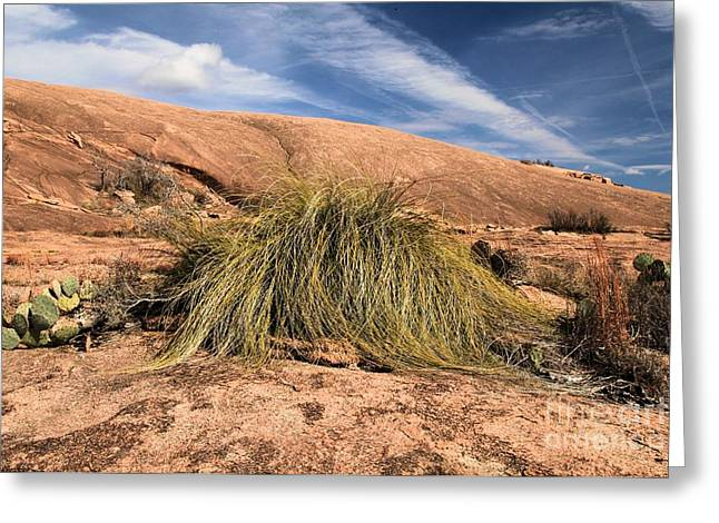 Texas Parks Greeting Cards - Enchanted Mop Greeting Card by Adam Jewell