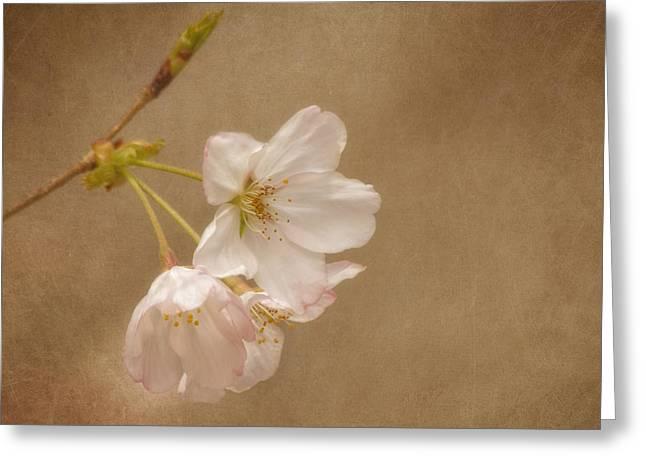 Glowing Floral Greeting Cards - Enchanted Morning Greeting Card by Kim Hojnacki