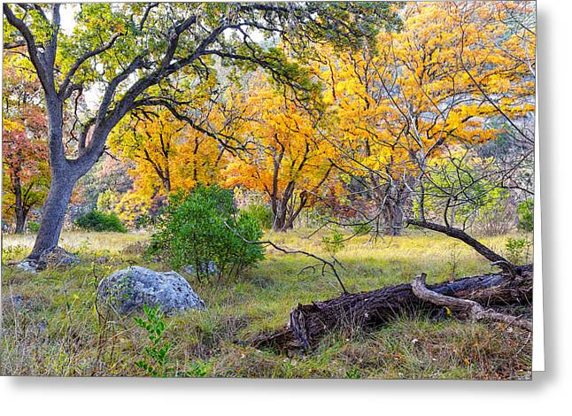 Crisp Greeting Cards - Enchanted Ruggedness Lost Maples State Natural Area - Texas Hill Country  Greeting Card by Silvio Ligutti