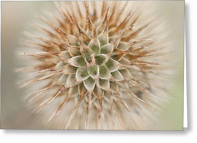 Flowered Greeting Cards - Enchanted Thistle Greeting Card by Terry Rowe