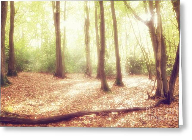 Enchanting Wall Art Greeting Cards - Enchanted Woodlands Greeting Card by Natalie Kinnear