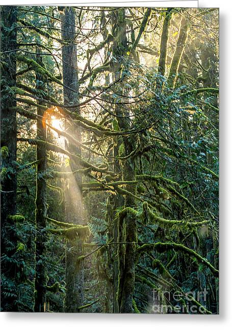 The Sun God Greeting Cards - Enchanted Forest Greeting Card by Alanna Dumonceaux