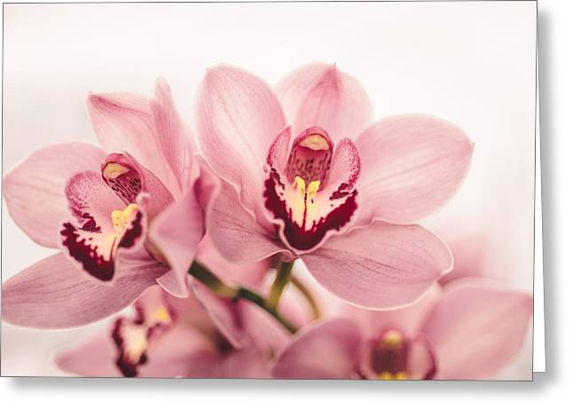 Floral Photographs Greeting Cards - Enchanting Greeting Card by Nastasia Cook
