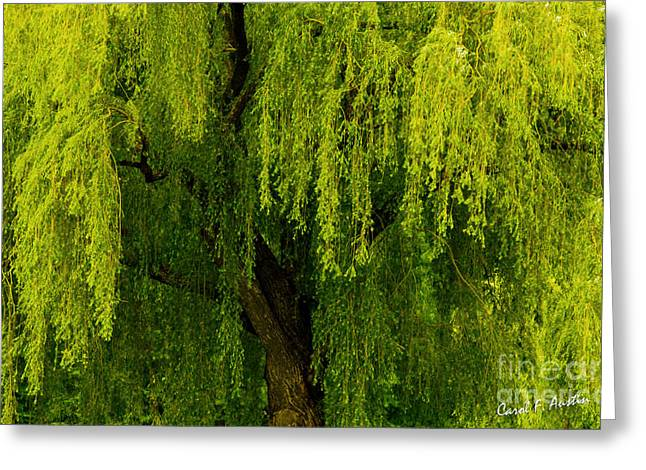 Graceful Tree Greeting Cards - Enchanting Weeping Willow Tree  Greeting Card by Carol F Austin