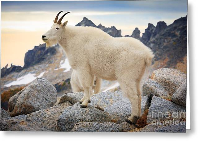 Leavenworth Greeting Cards - Enchantment Goat Greeting Card by Inge Johnsson