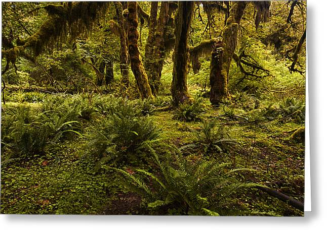 Olympic National Park Greeting Cards - Enchantment Greeting Card by Mark Kiver