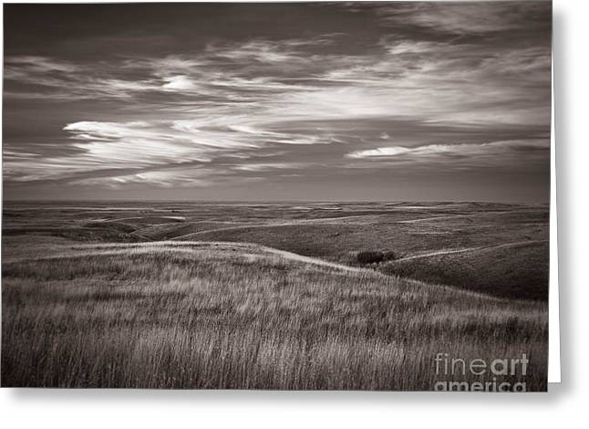 Cypress Hills Greeting Cards - Enchantment Greeting Card by Royce Howland