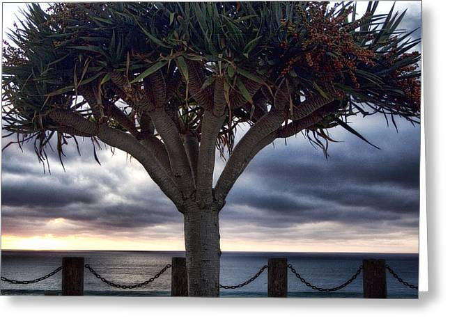 Encinitas Sunset Greeting Card by Carol Leigh