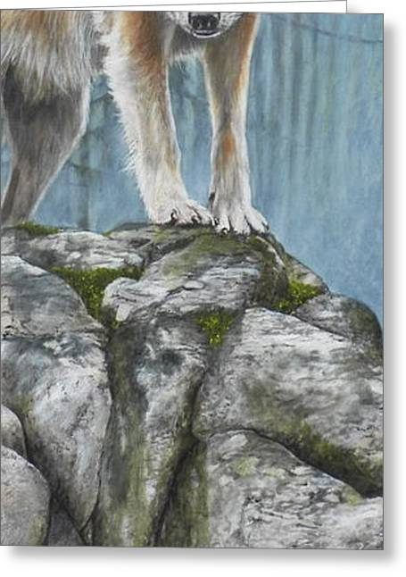 Northwoods Greeting Cards - Encounter Greeting Card by Rob Dreyer AFC