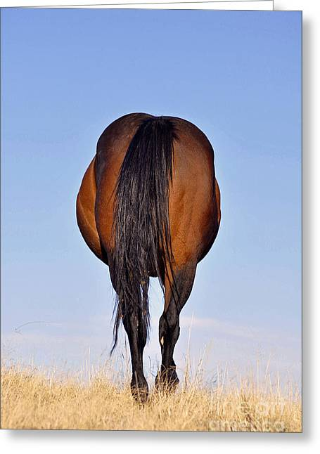 Quarter Horses Greeting Cards - End Of Conversation Greeting Card by Juls Adams